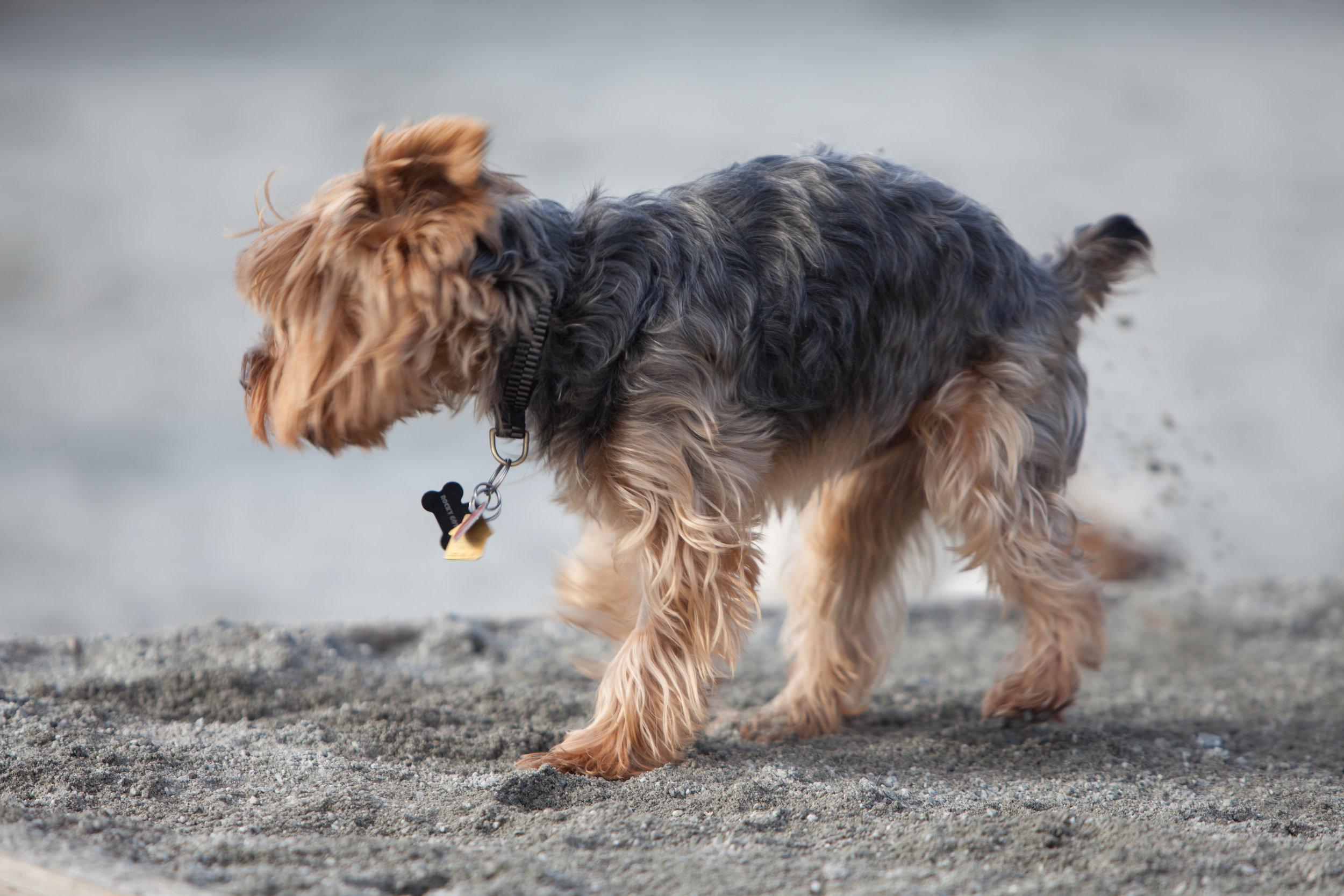 Here Doggy (15 of 103).jpg