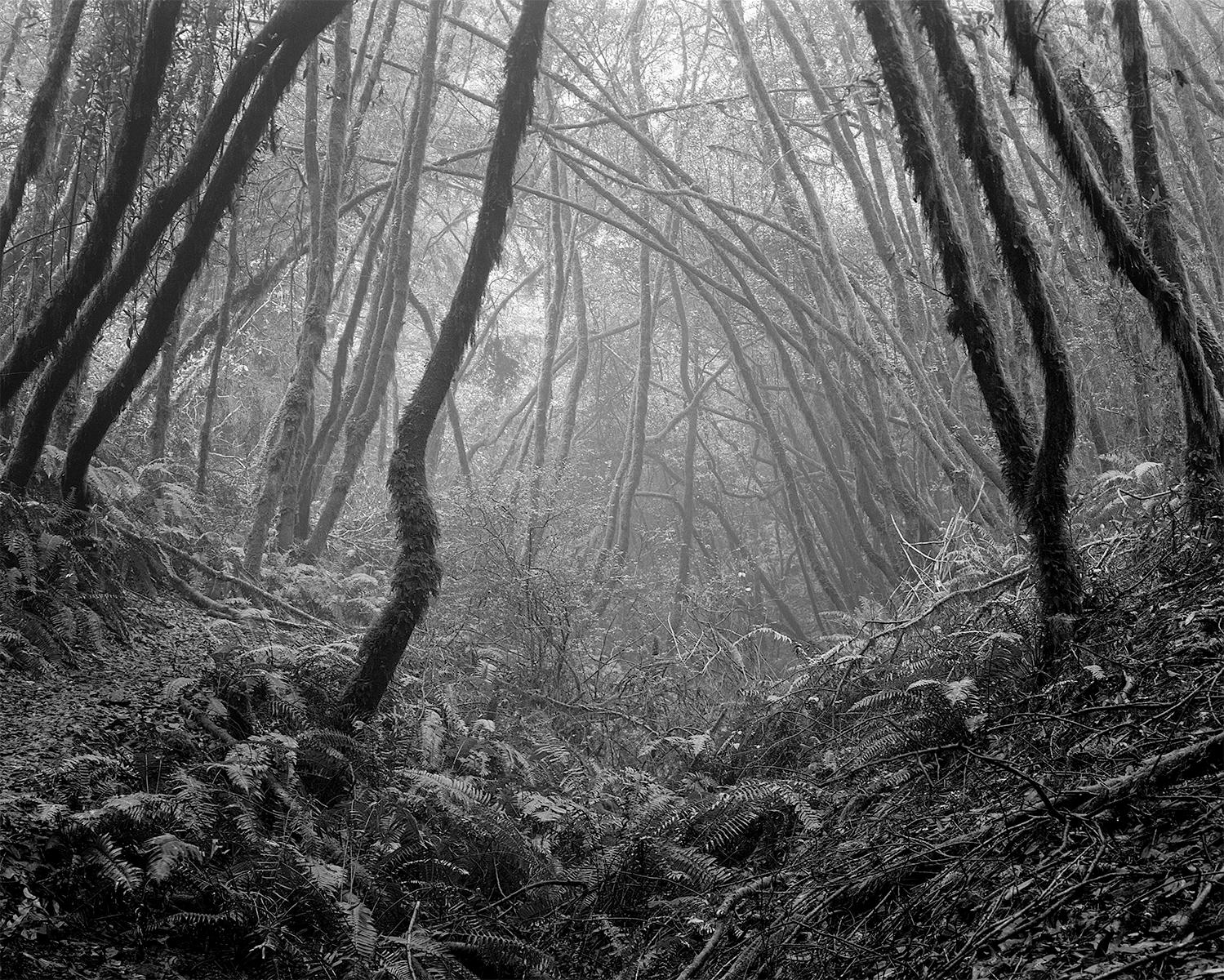 Sacred Forest, Mt Tamalpais, CA 2017