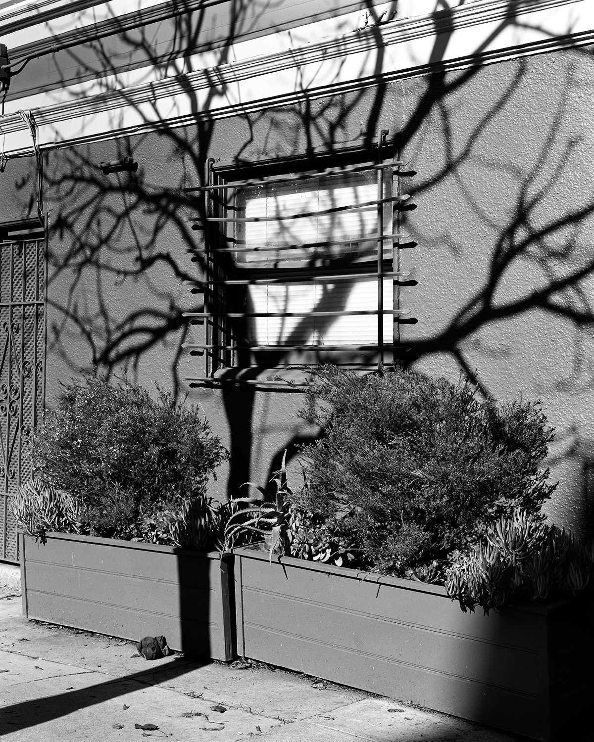 Tree Shadow, Lower Haight, San Francisco 2017