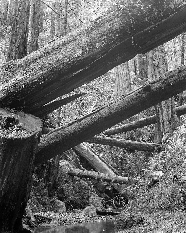 Twenty-seven Trees, Mt Tamalpais, CA 2017