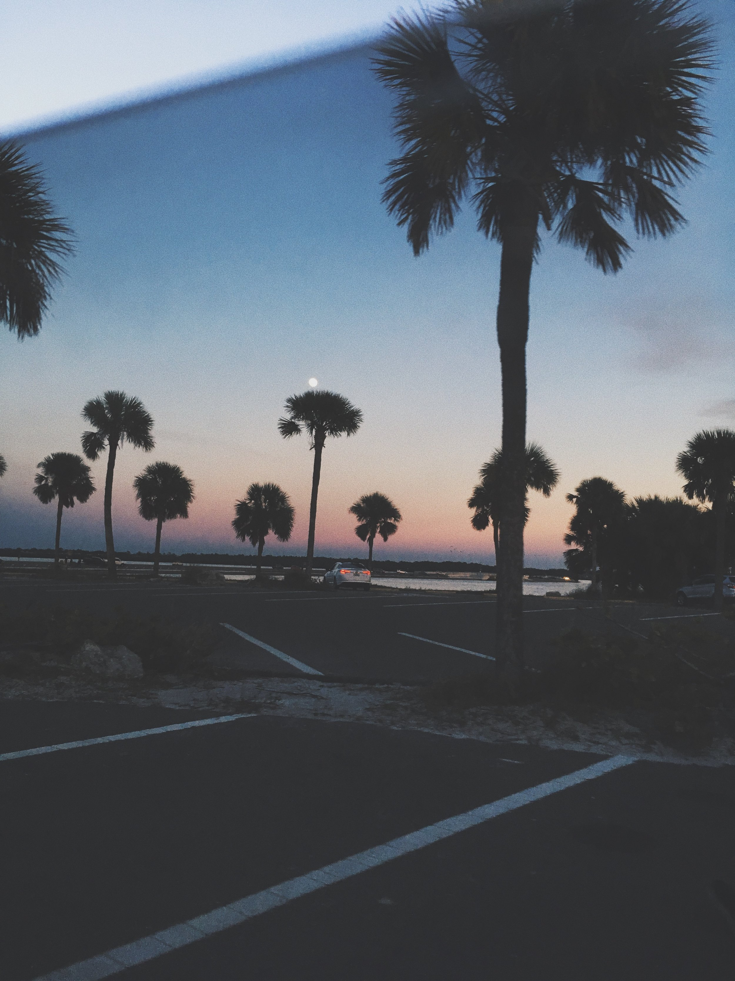 Palm trees & sunsets