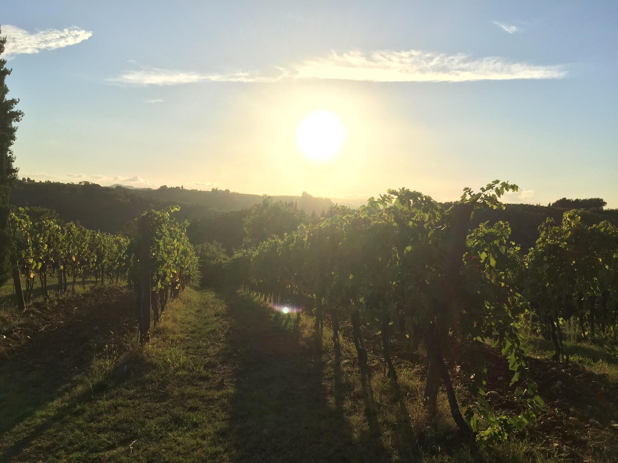 Tuscany vineyards grapes and olives sunset Chianti www.annakooiman.com anna kooiman