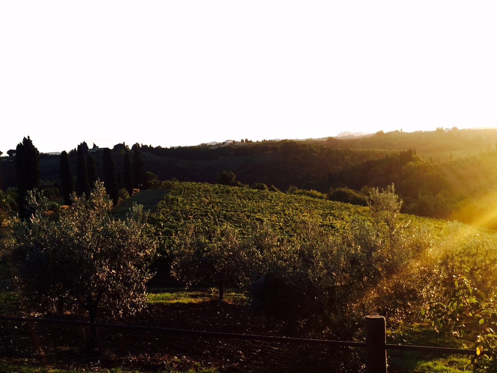 tuscan vineyards wine grapes wine tasting www.annakooiman.com Anna Kooiman Italy Chianti