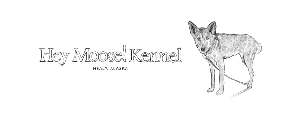 Hey Moose Kennel Blog Hey Moose Kennel
