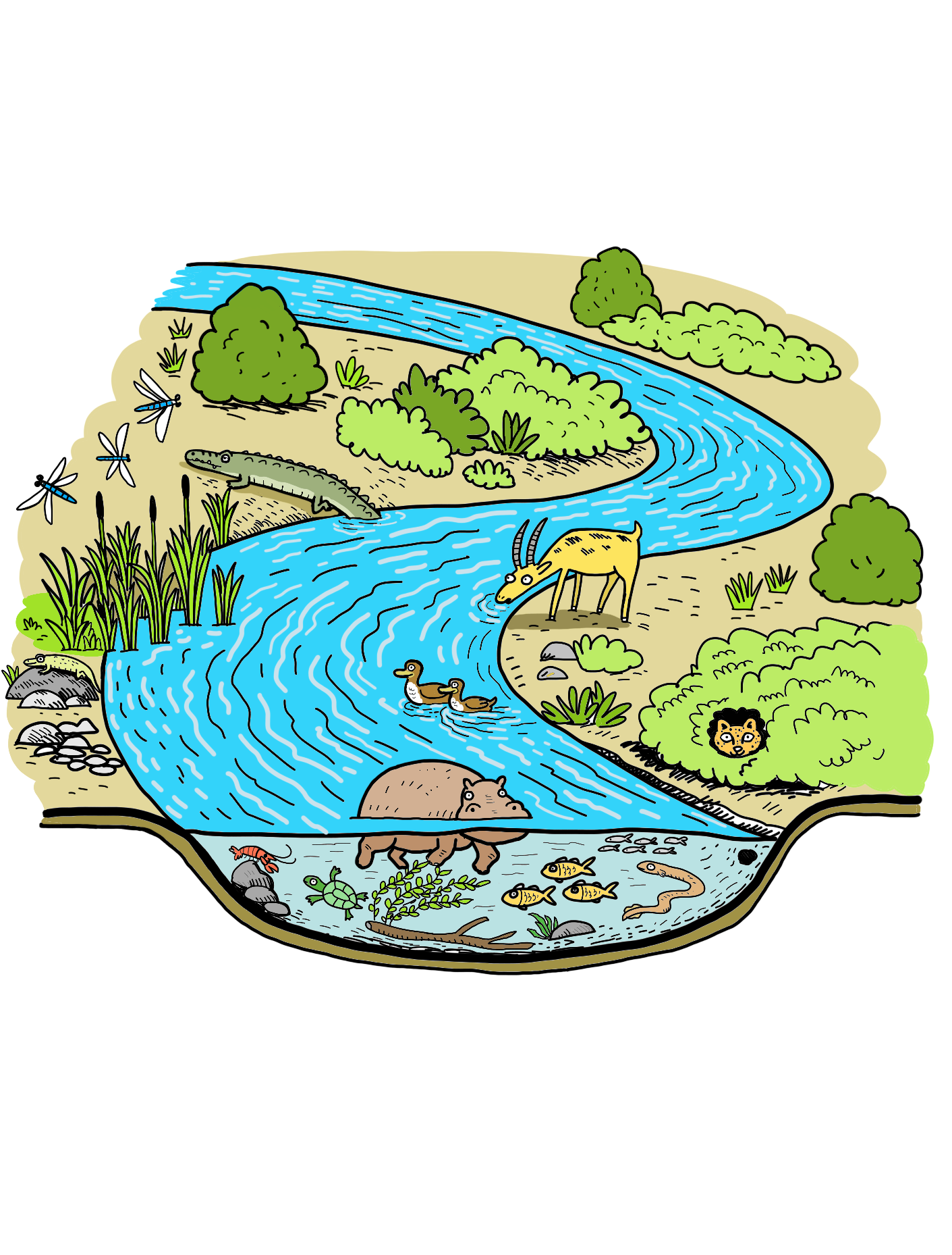 ecosystem_river_coloured.png