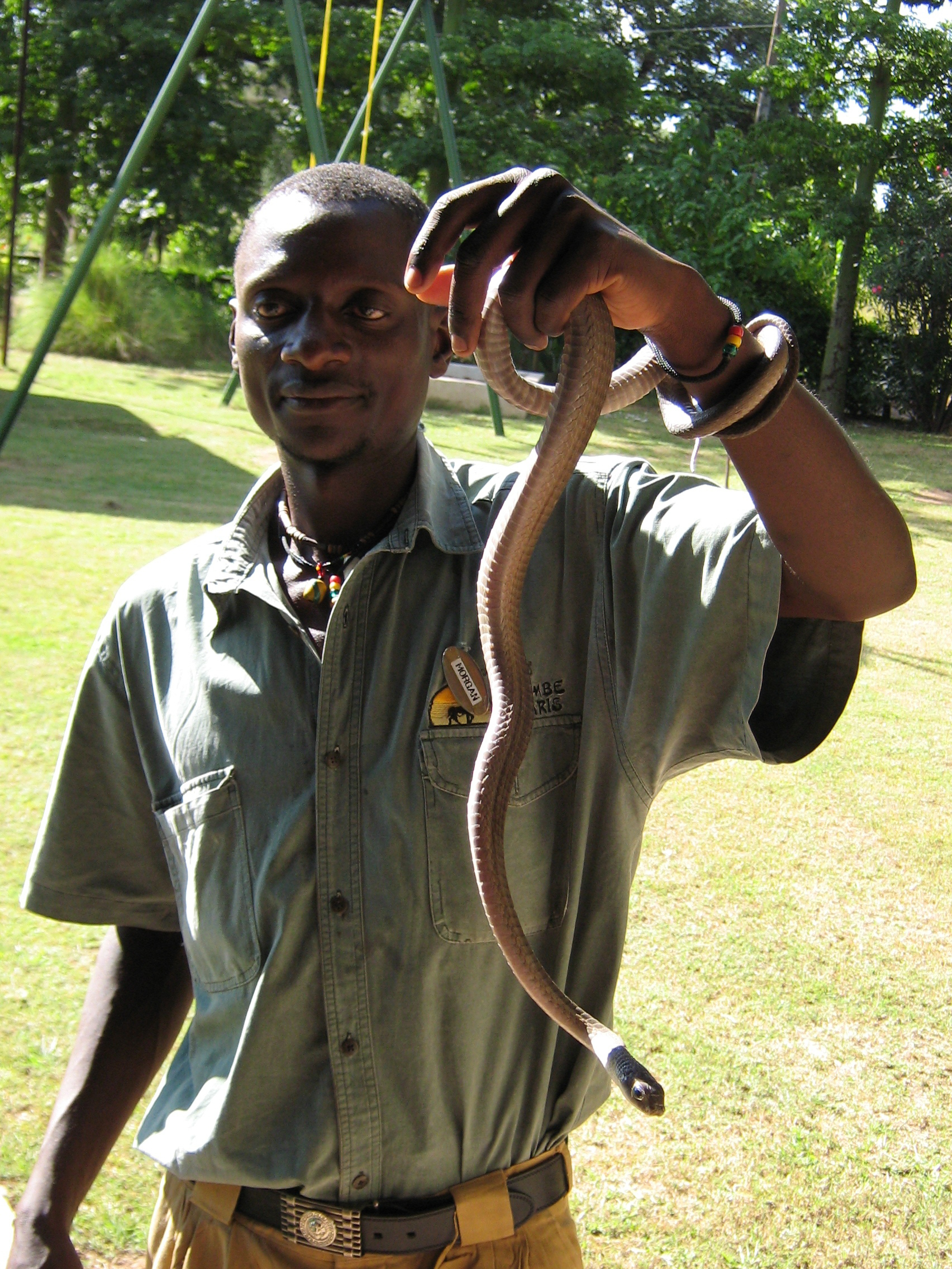 An important lesson at the Livingstone crocodile and snake farm
