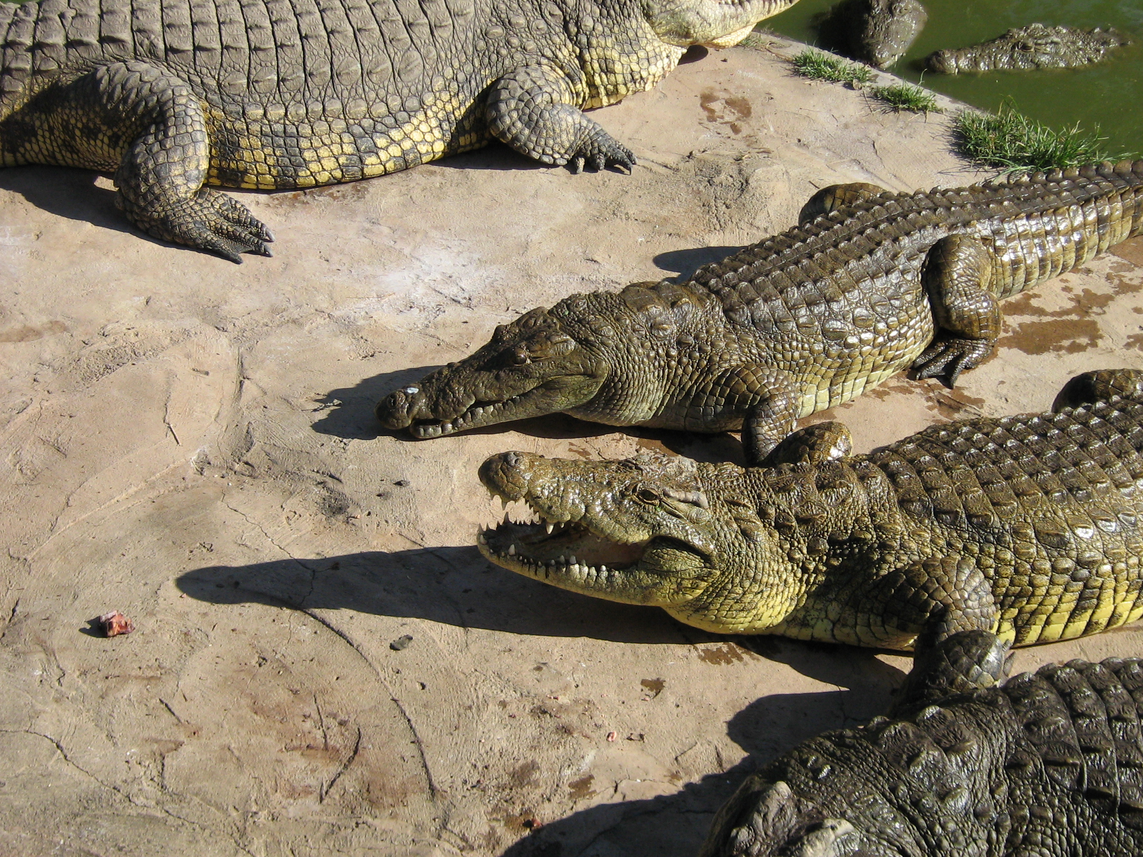 Livingstone Croc and Snake Farm