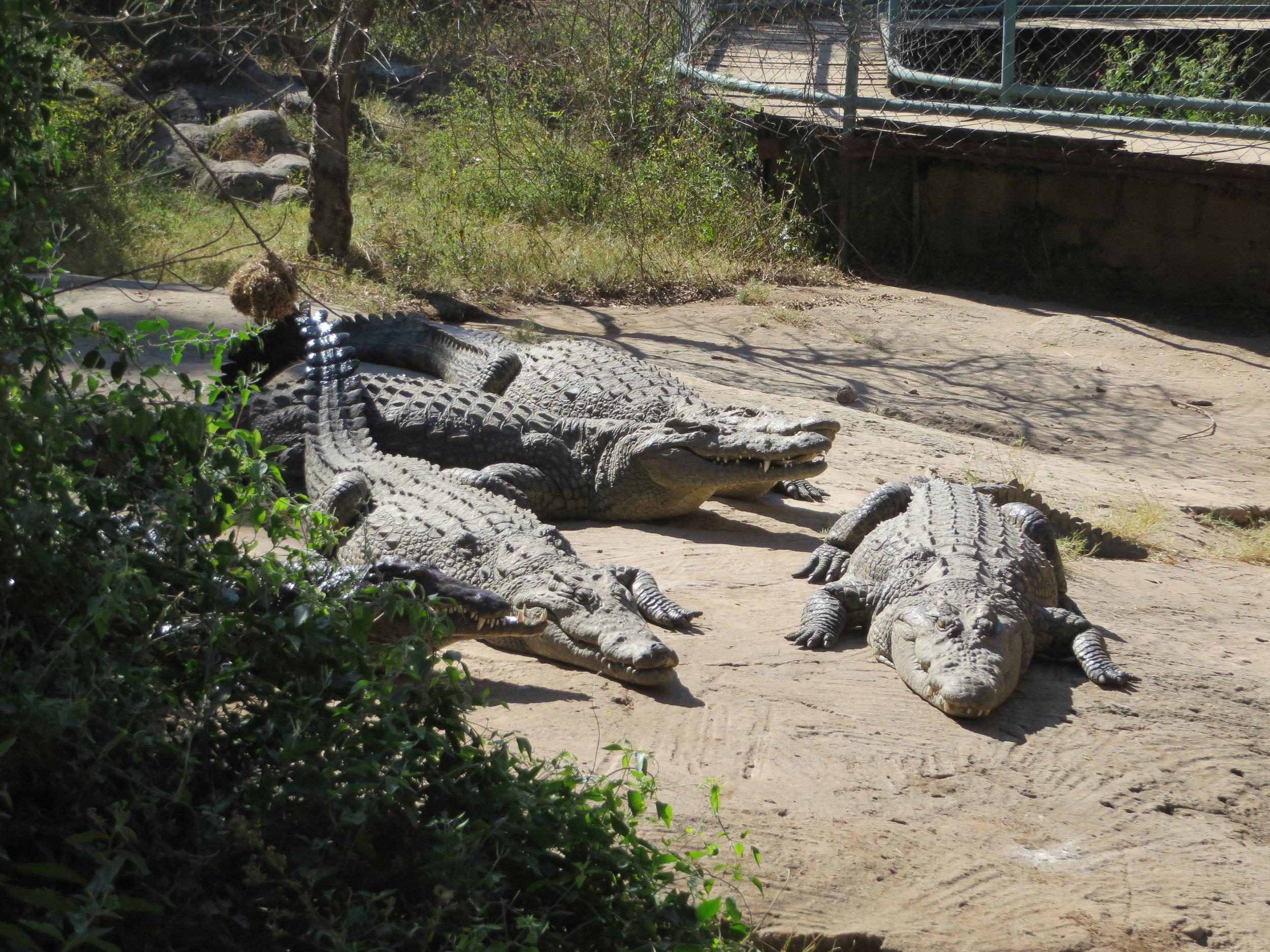 Livingstone crocodile and snake farm