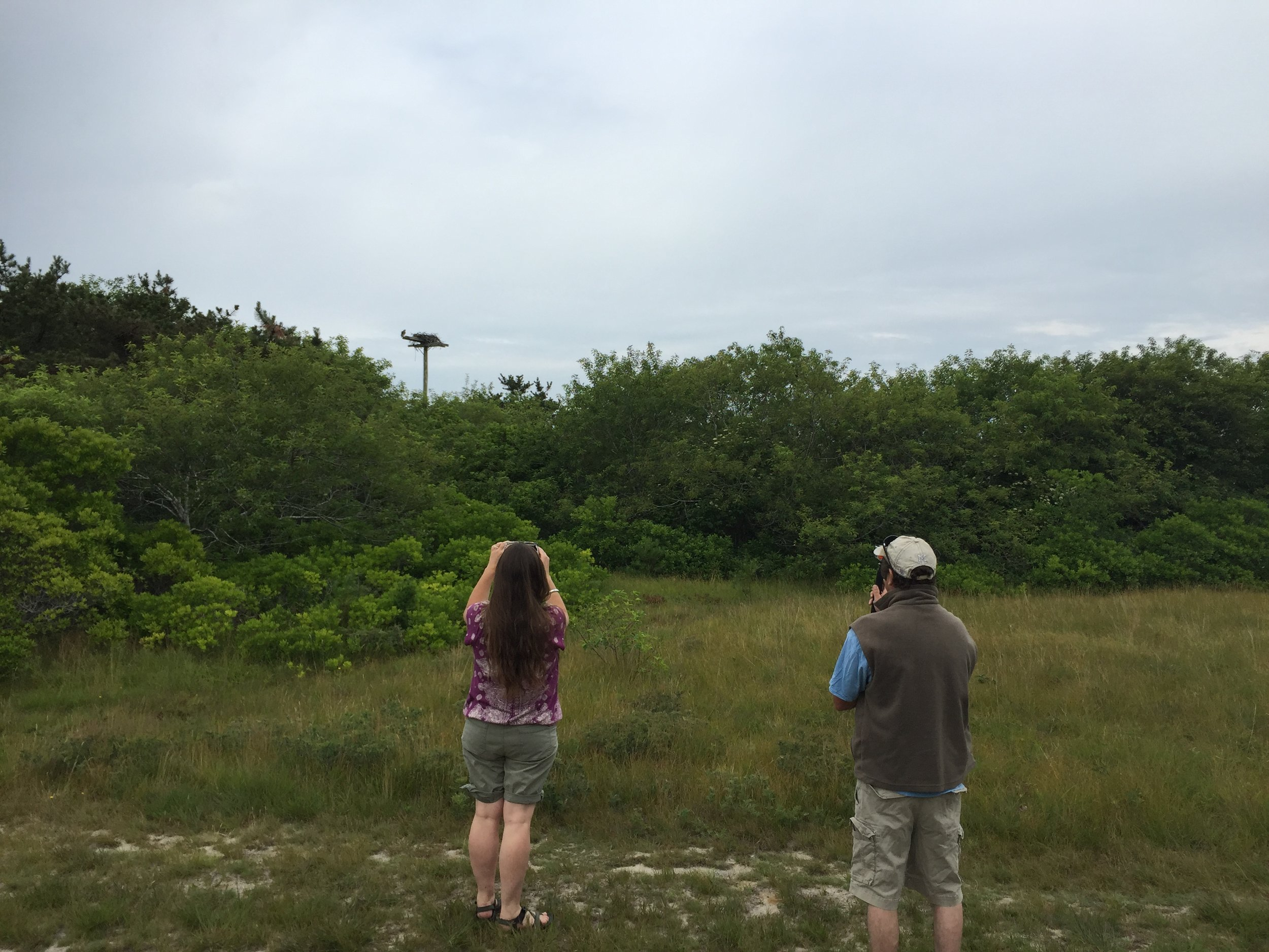Birders photographing an active osprey nest on Hummock Pond.