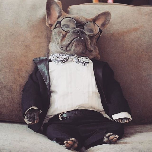 Me realizing how hungover I am from Saturday night while trying to calculate how many more bottles of wine I need get into my body to beat my personal best for a 3-day weekend. / 📸: @funny_frenchie / #justdoit #personalbest