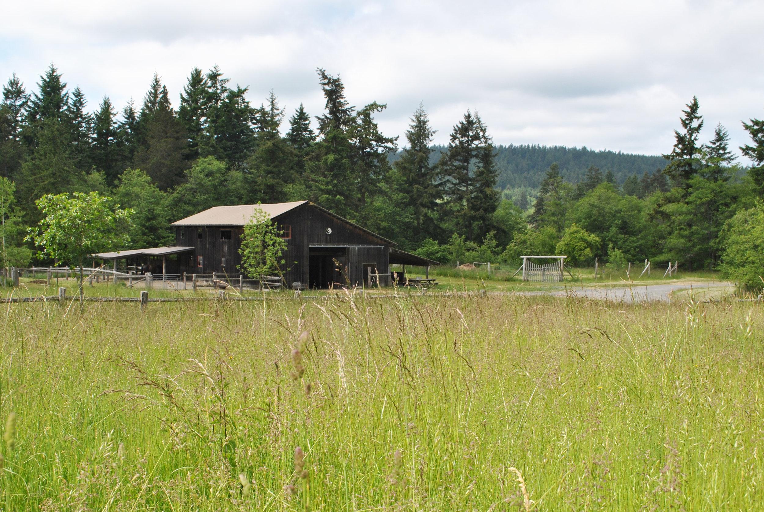 barn.field (website).jpg