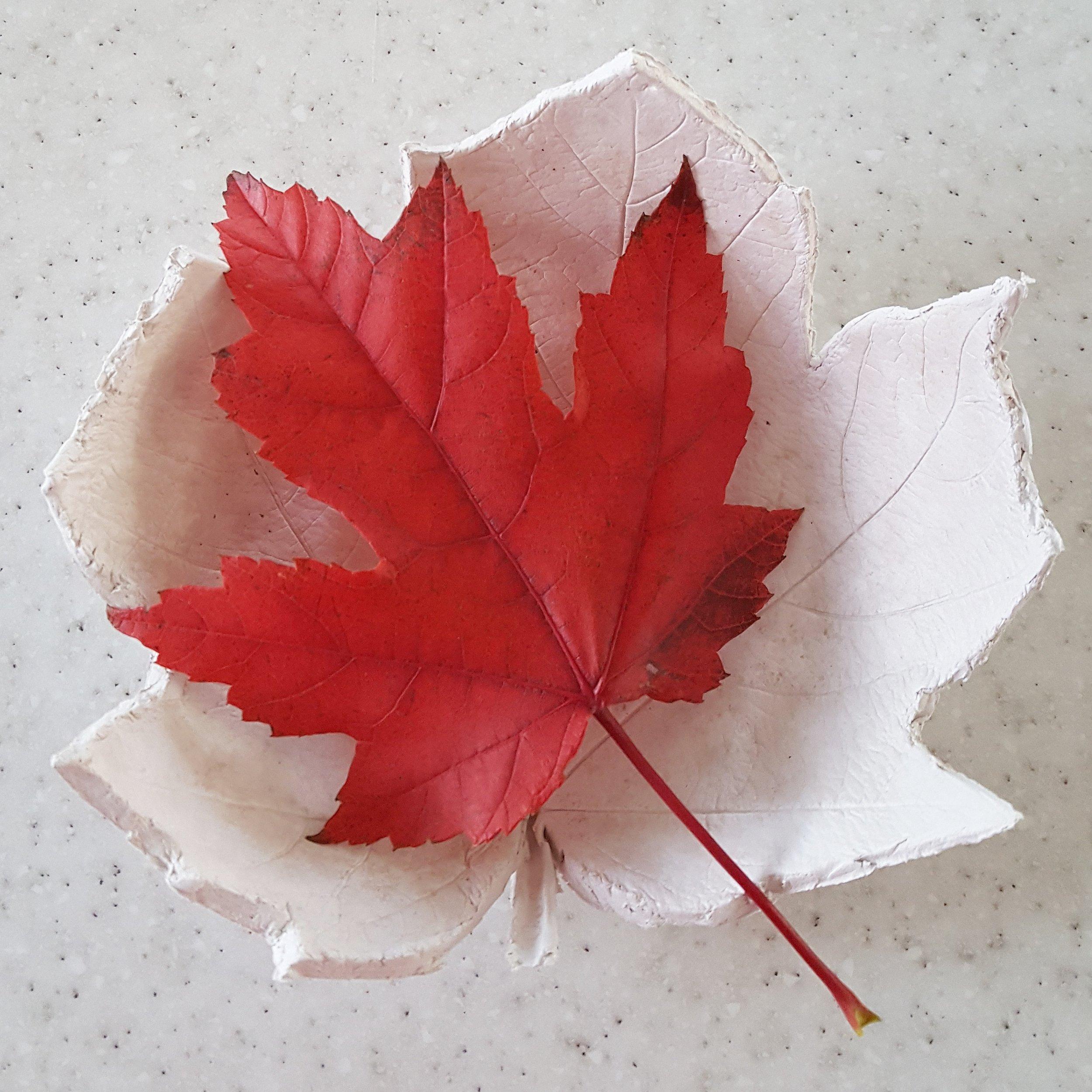 Matthew's finished maple leaf