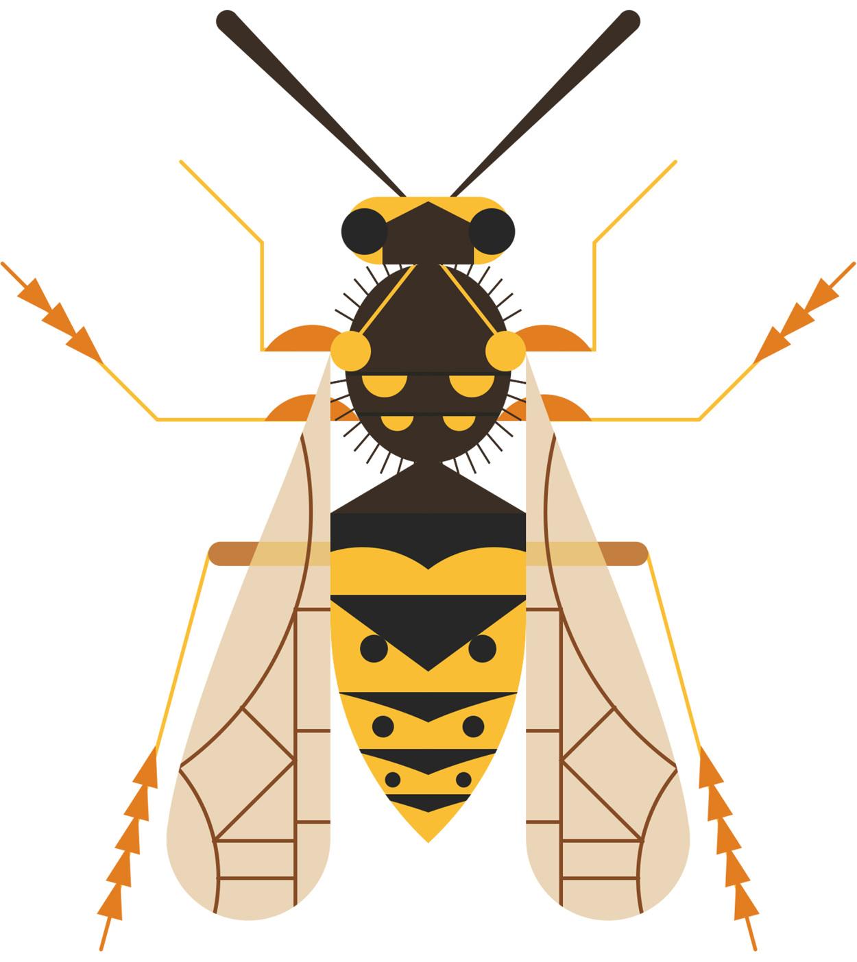 Common-Wasp_1250.jpg