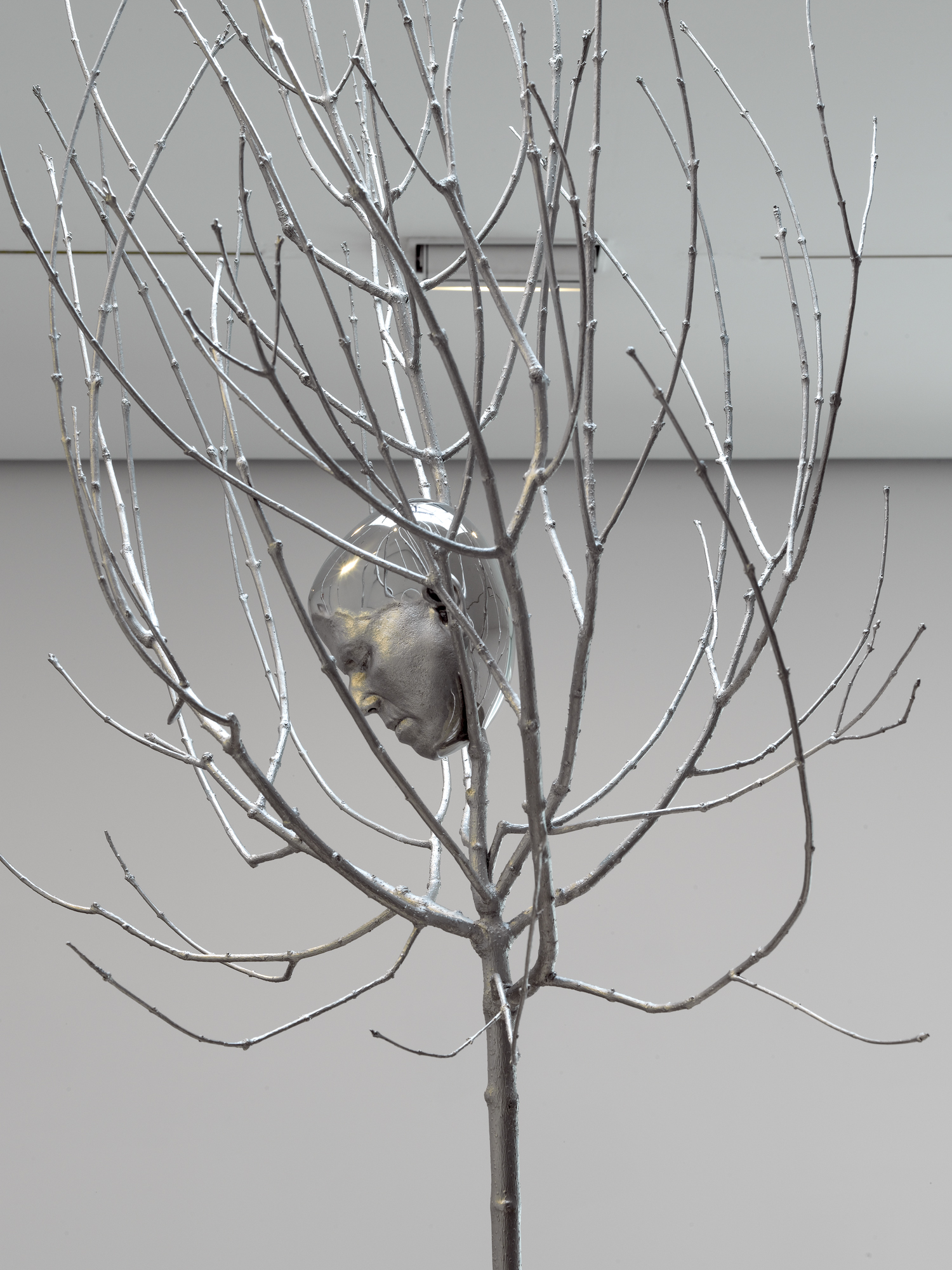 06_head_in_tree.jpg