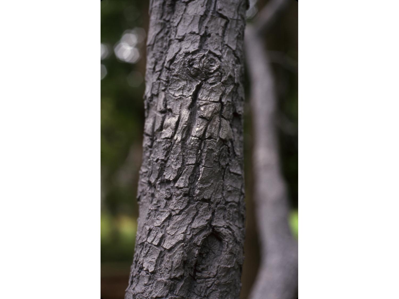 09_untitled_tree_new.jpg