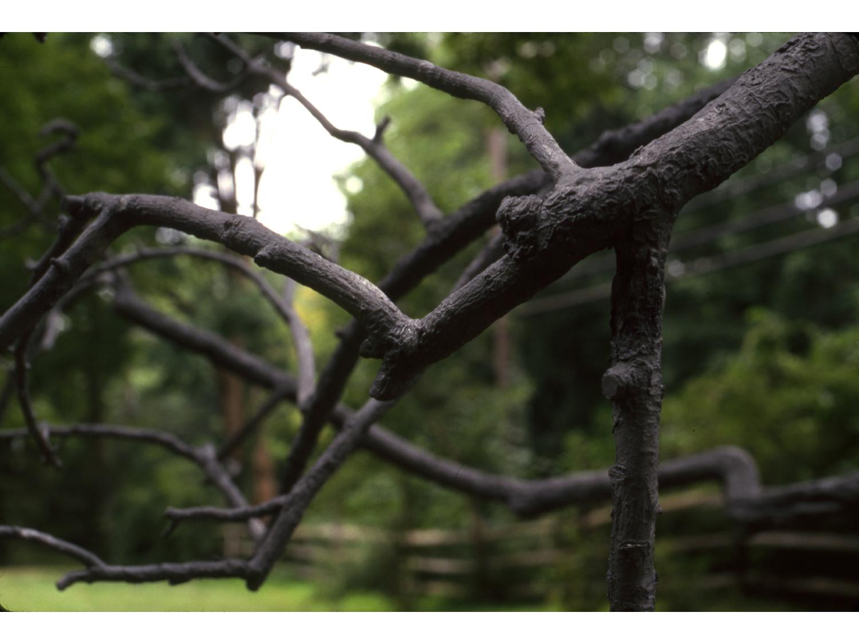 12_untitled_tree_new.jpg