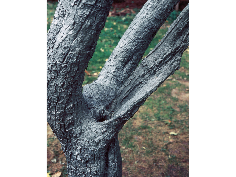10_untitled_tree_new.jpg