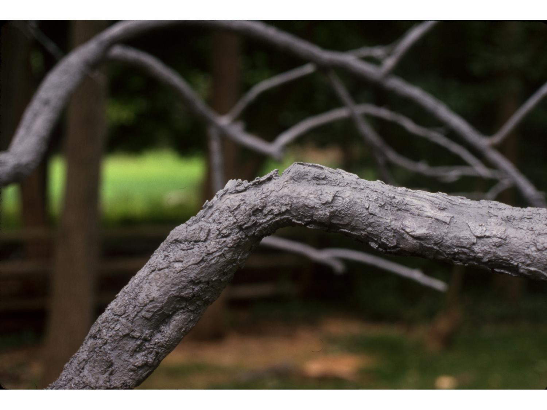 11_untitled_tree_new.jpg