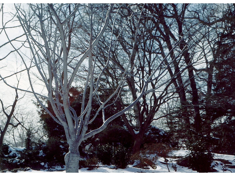 05_tree_new.jpg