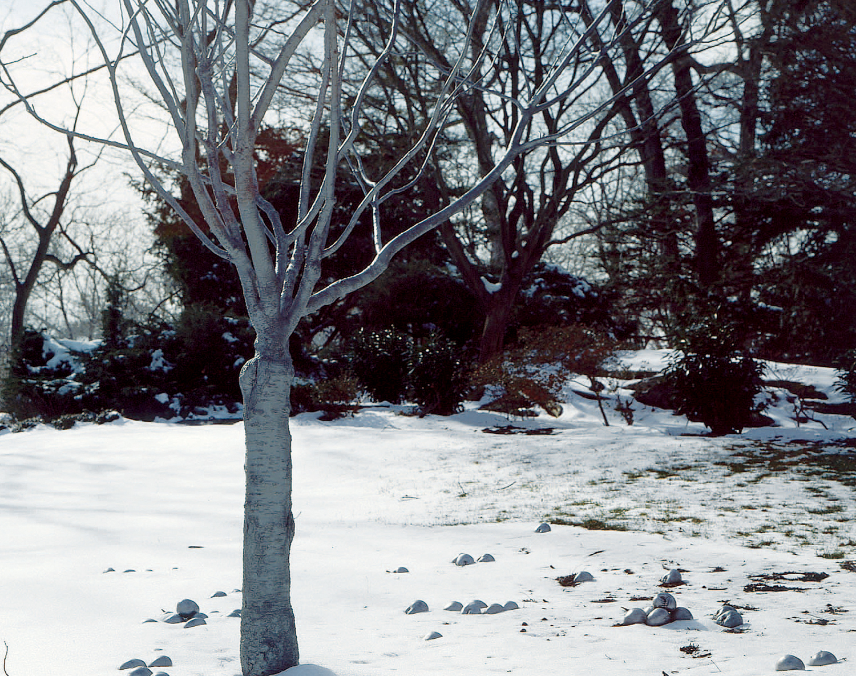 06_tree.jpg
