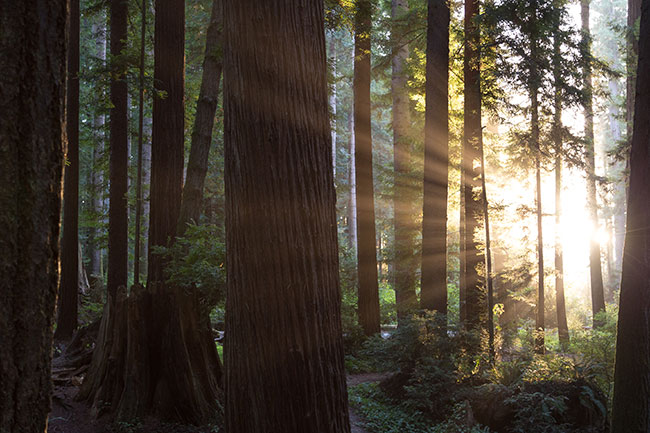 Redwood trees offer a nice alternative to the traditional psychotherapy office.