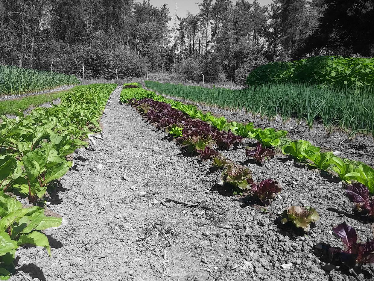 Paniers de légumes Sherbrooke