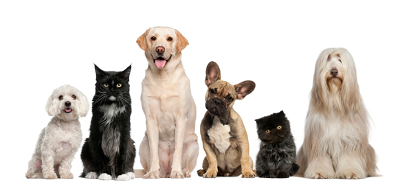 Dogs and Cats Sitting