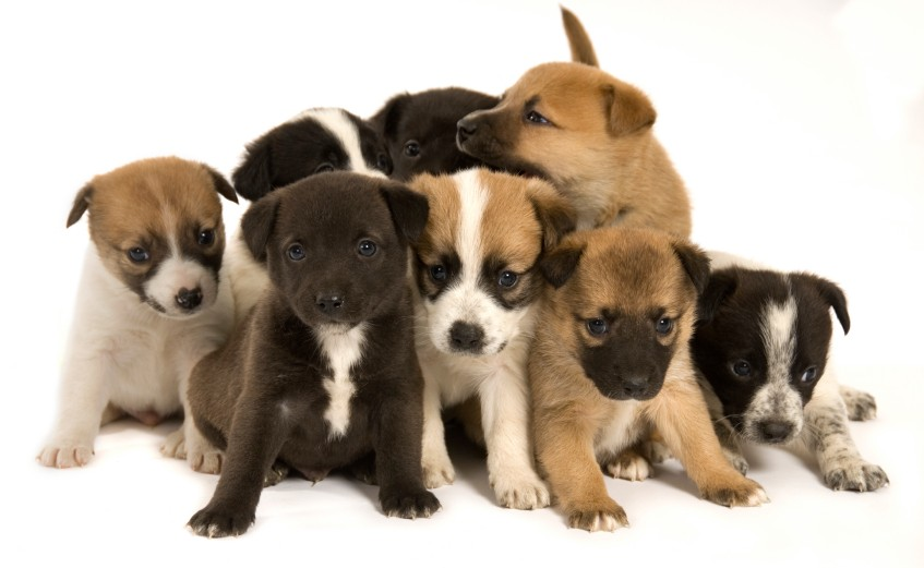 best-puppies-picture122.jpg