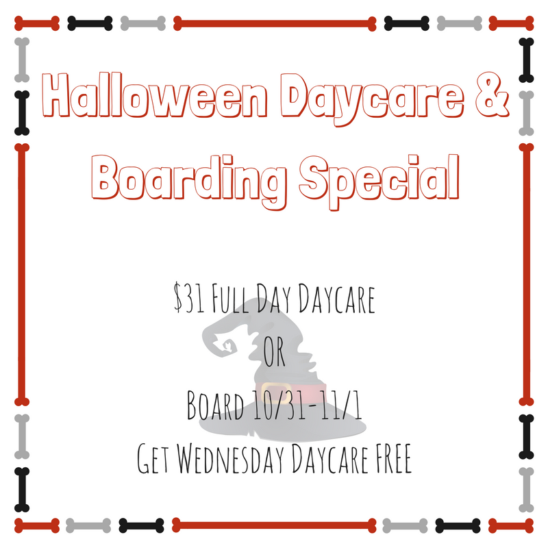 Halloween Daycare & Boarding Special.png