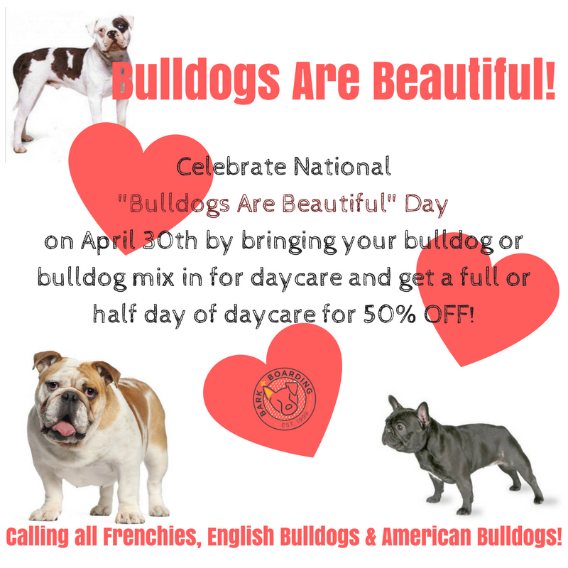 Bulldogs Are Beautiful!.png