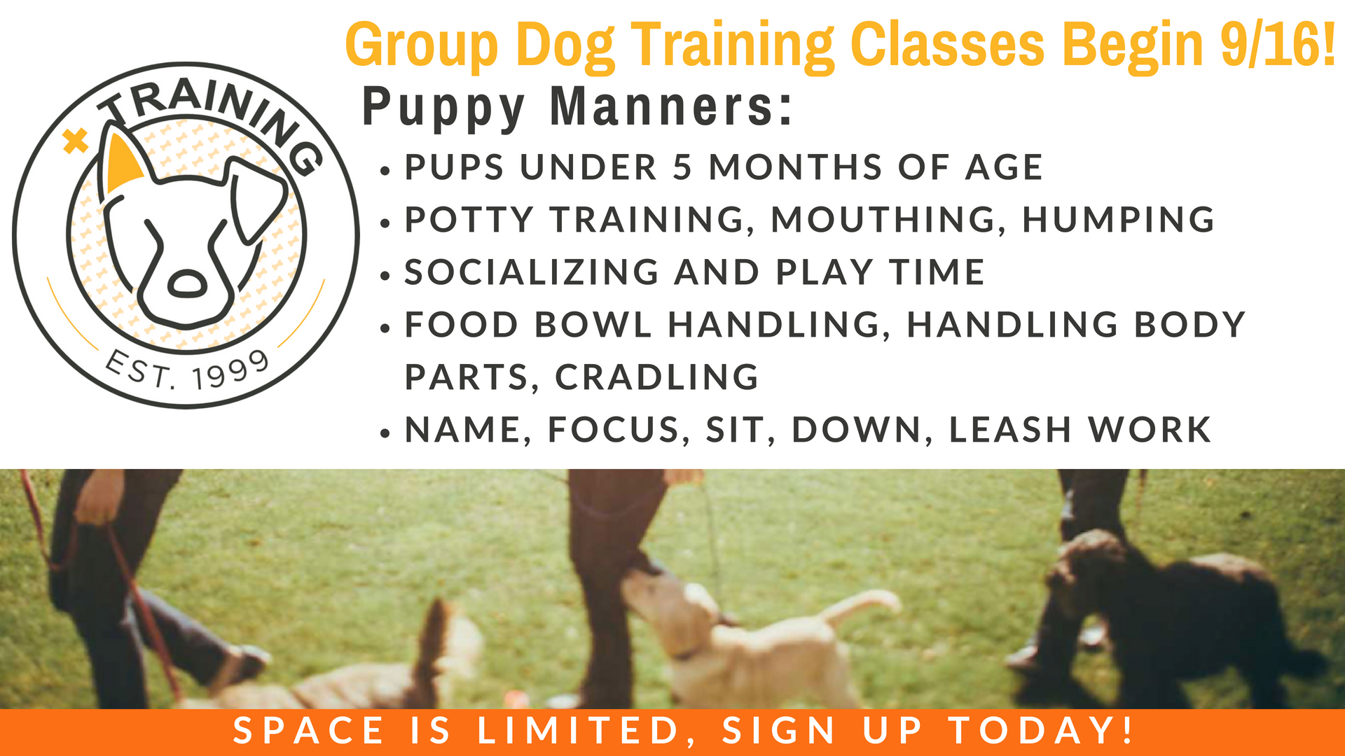 Dog Training - Puppy Manners.jpg