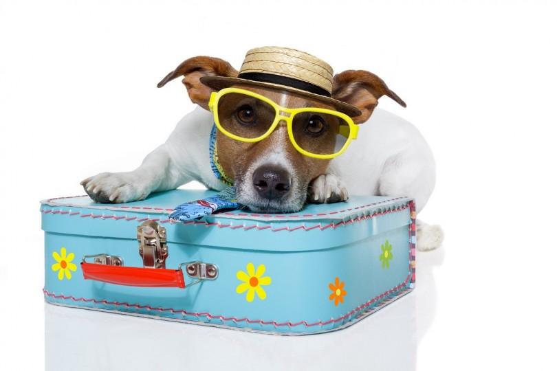 Doggie Vacation!