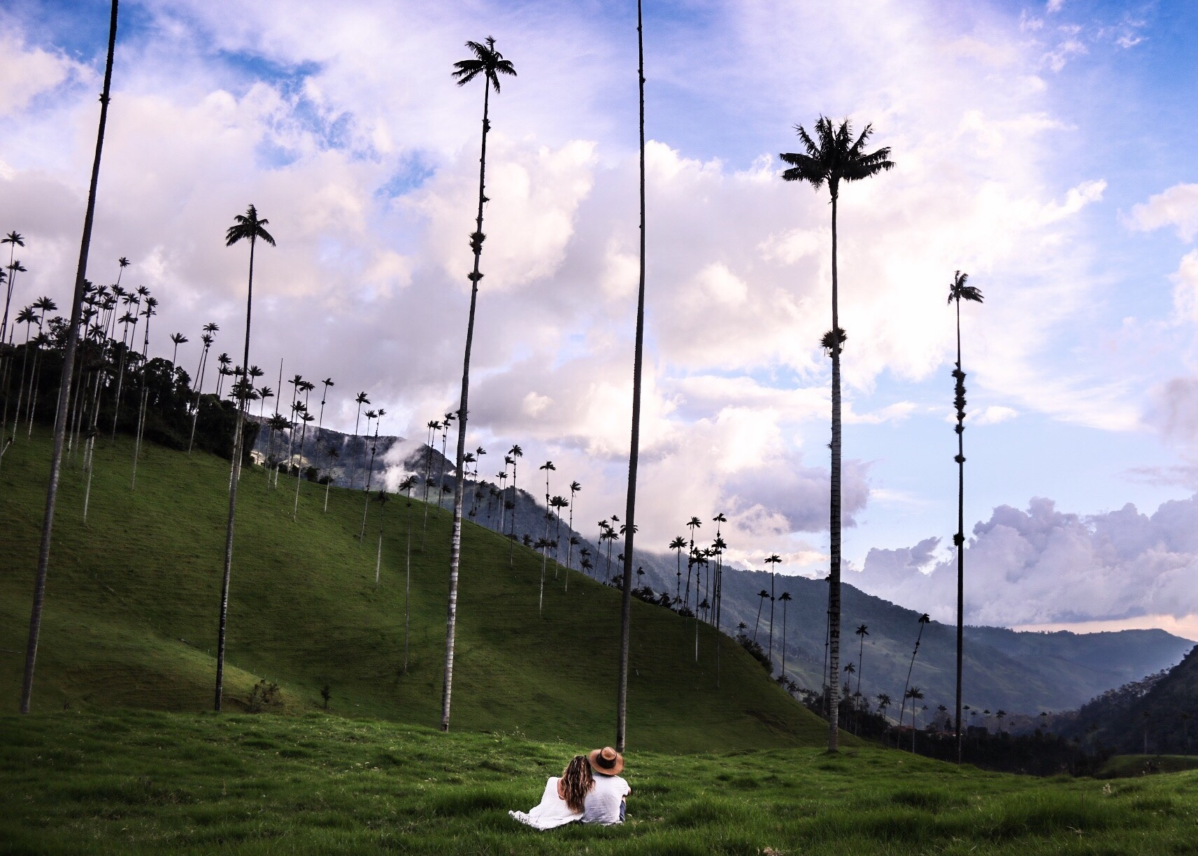 Wax Palms (The tallest in the world) in Valle de Cocora