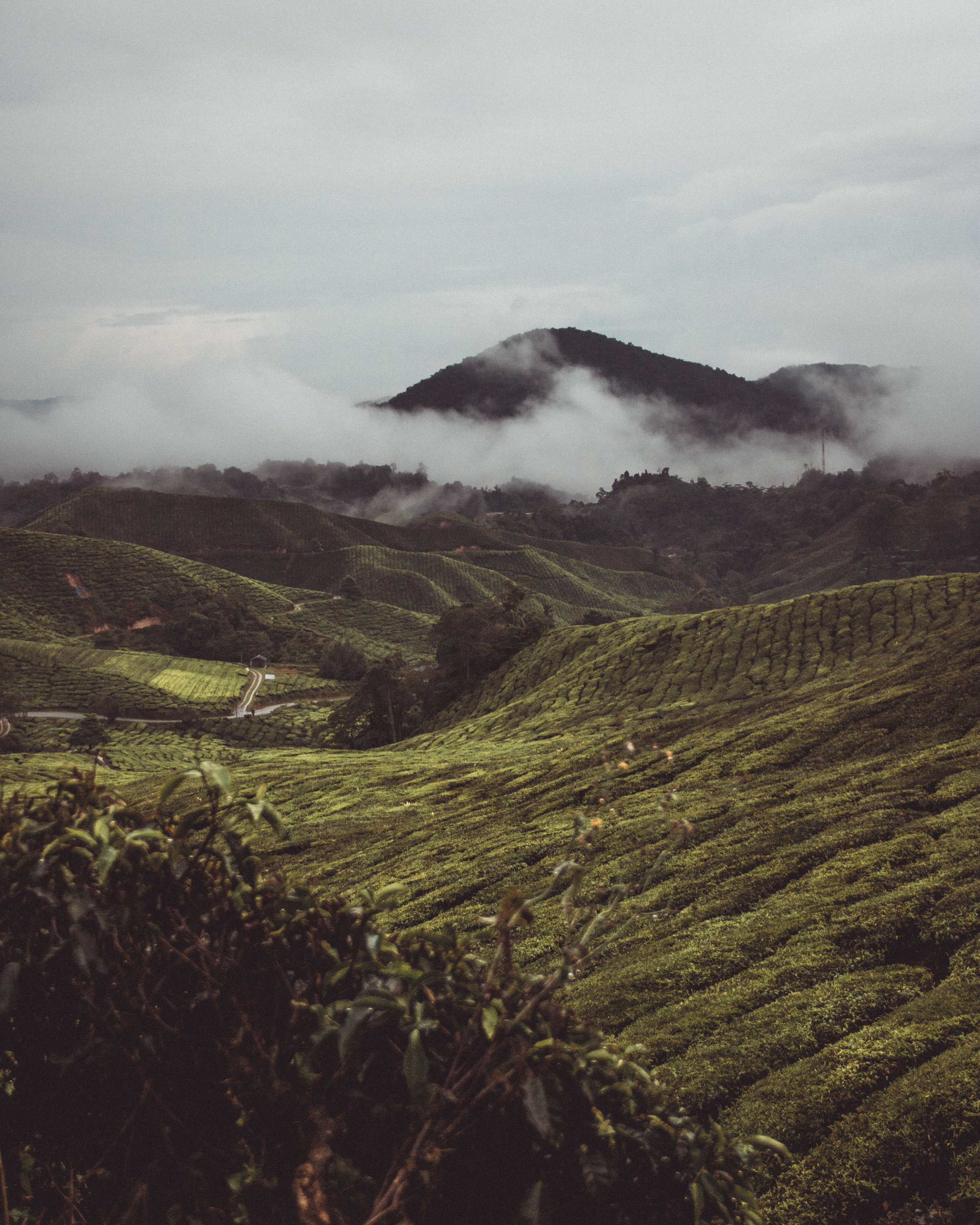 Farms in the beautiful Cameron Highlands.