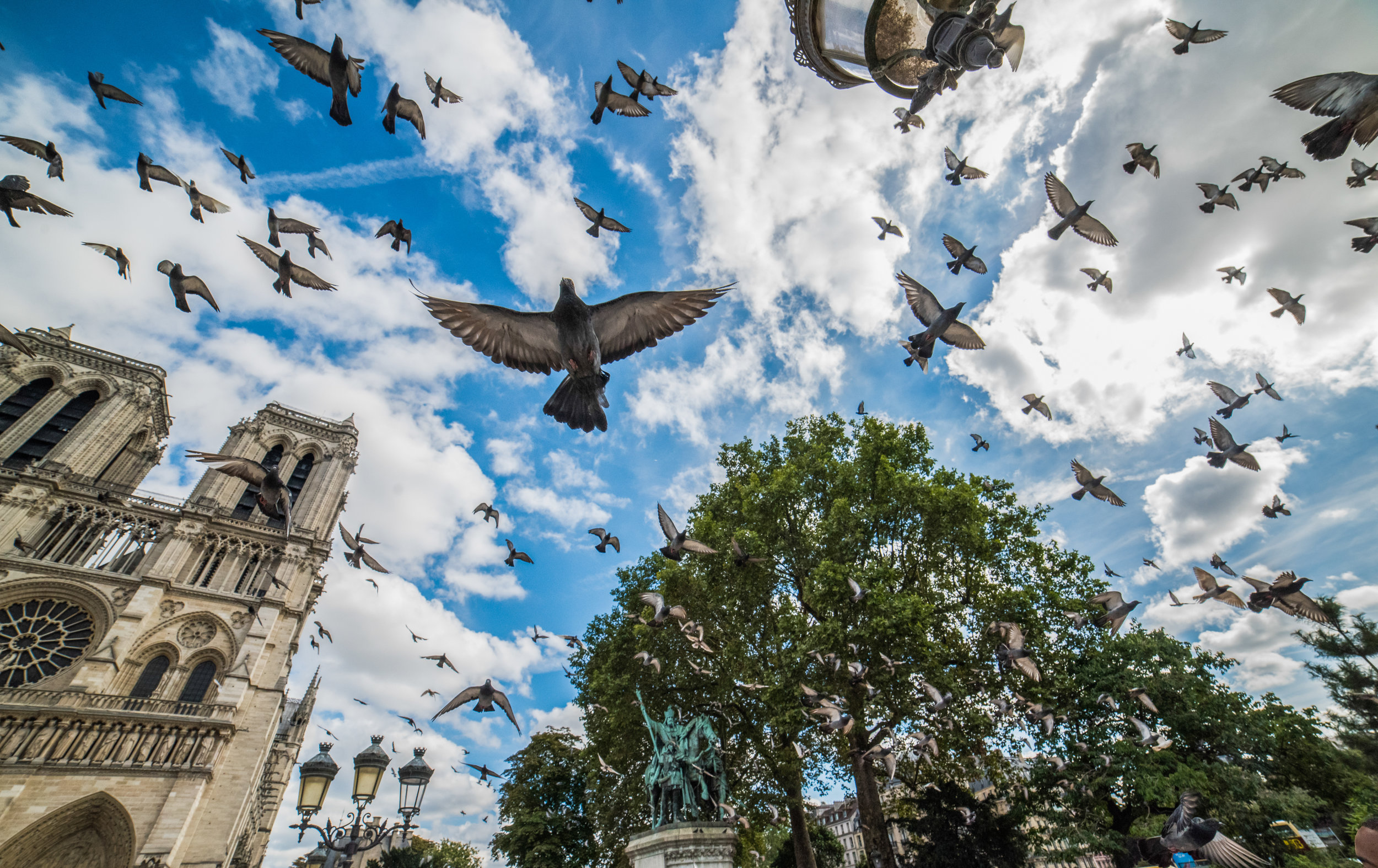 22 Birds Of Paris - Everest Maher.jpg