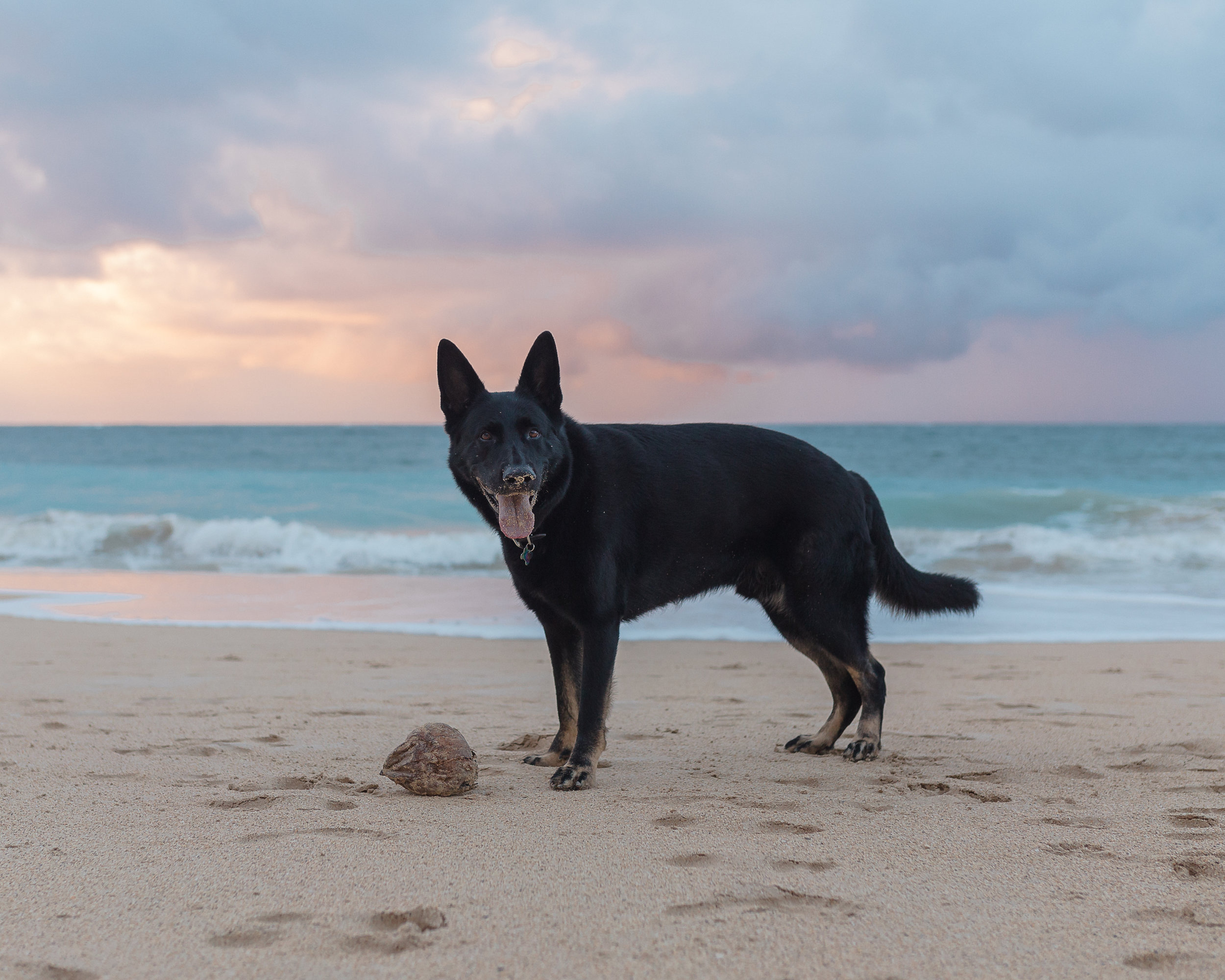 Maui Pet Photographer