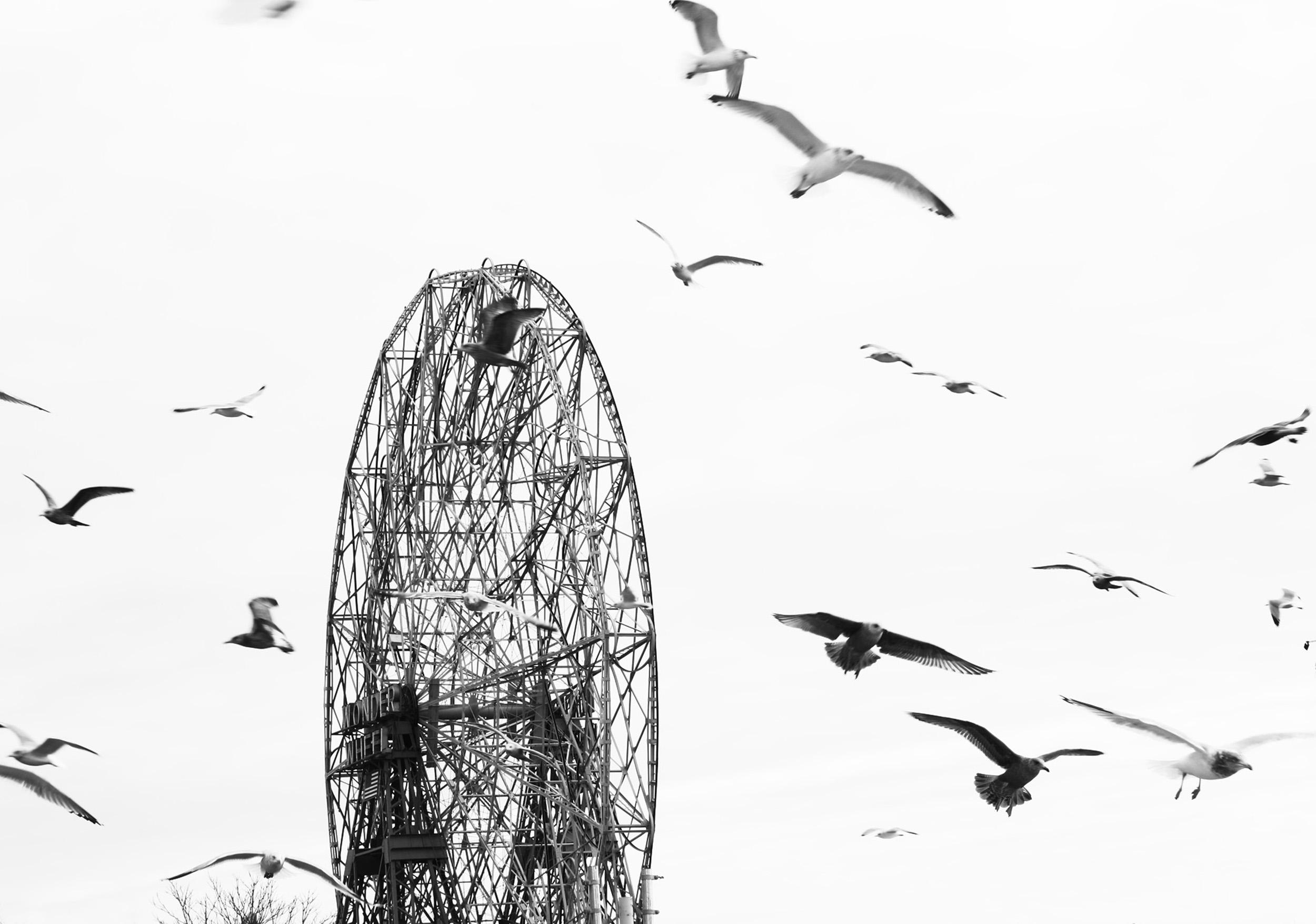ss 2500new-coney-island-4.jpg