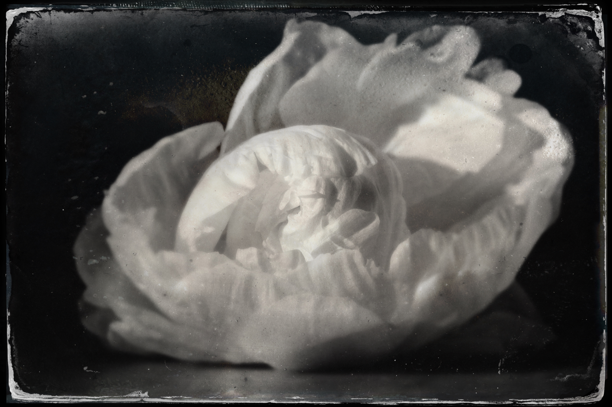 tintype attachment-1.jpeg