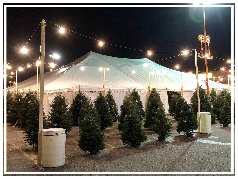 Patton Christmas Trees