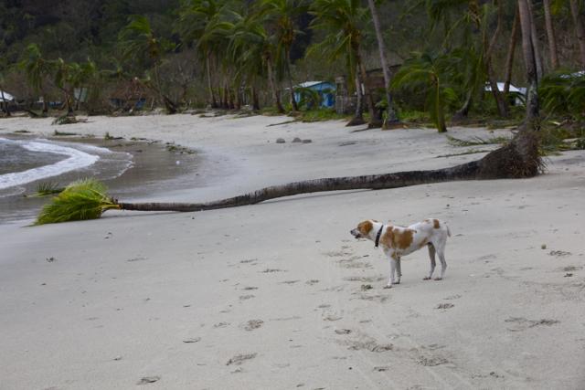 elena-levon-fiji-cyclone-winston-yalobi-village-waya-island-yasawa-truth-government-us-peace-corps-cowards-fiji-tourism-religion-76.jpg