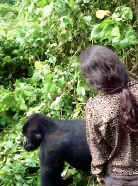 With wild gorillas in Uganda 2012