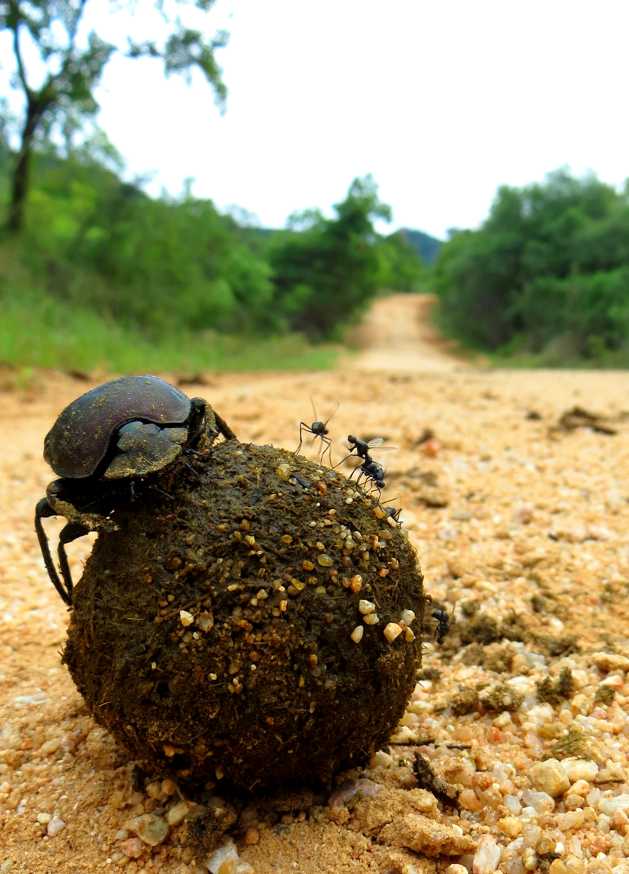 Watching dung beetles make their balls is always a hit with our guests