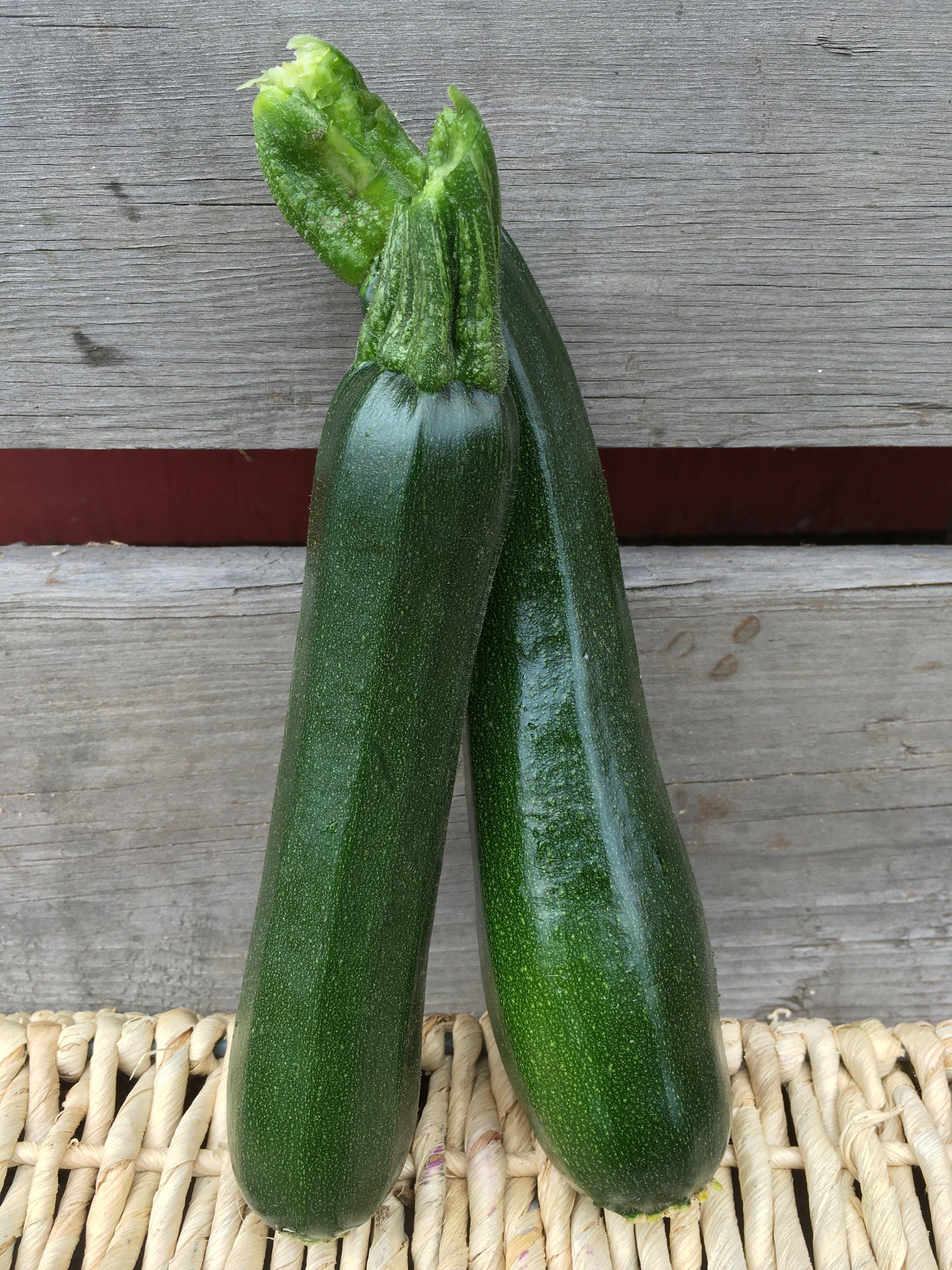 Summer squash / zucchini