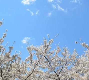 flowers-flower-blossom.jpg