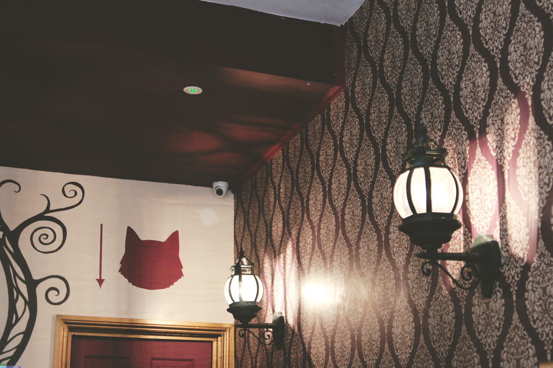 catcafe5.jpg