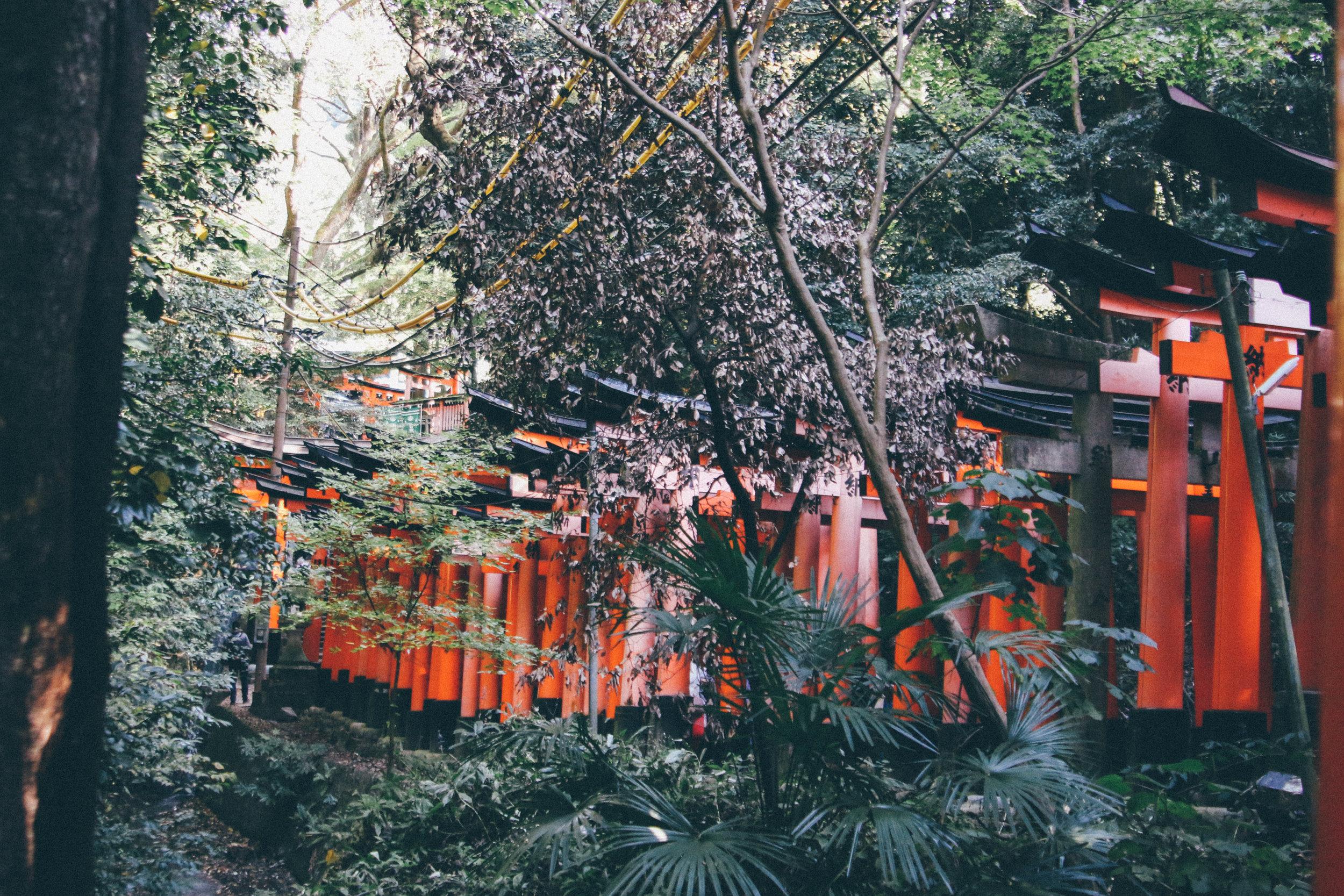 Kyoto-98.jpg