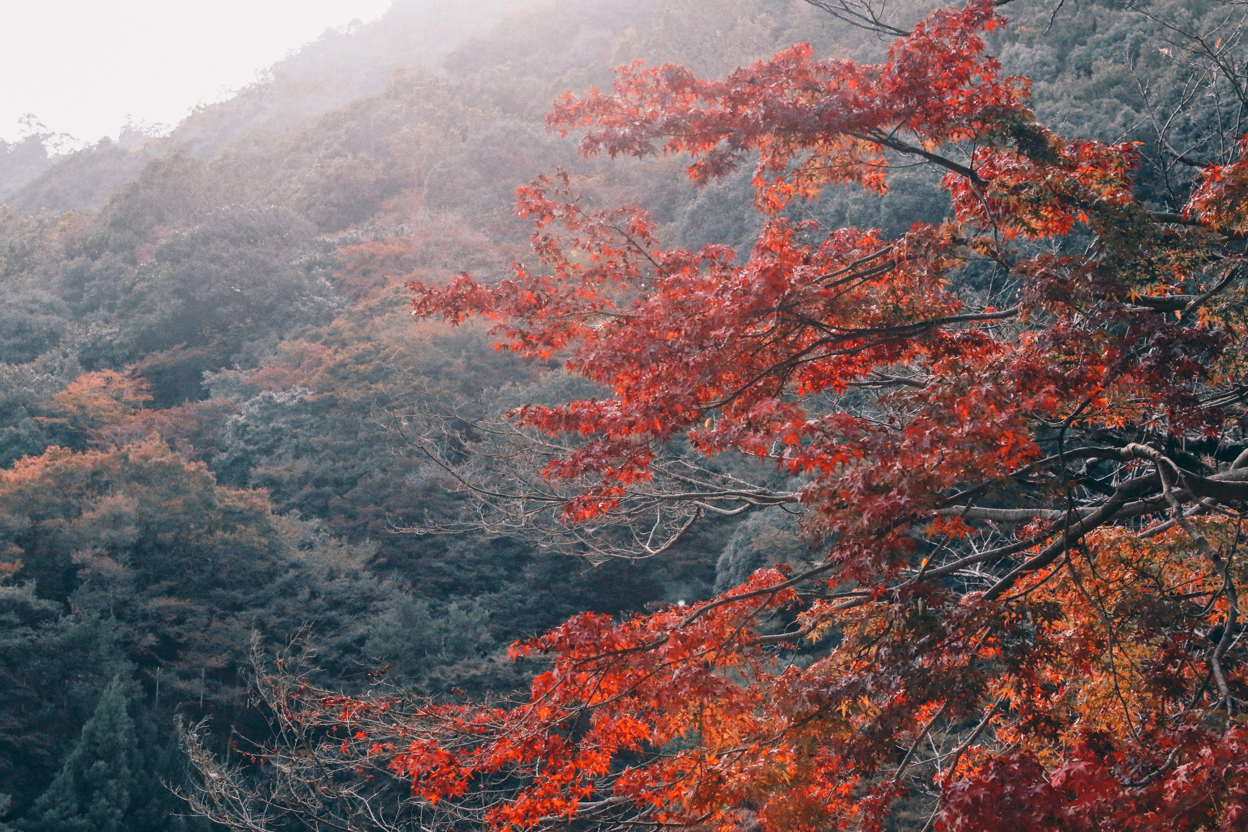 Kyoto-84.jpg