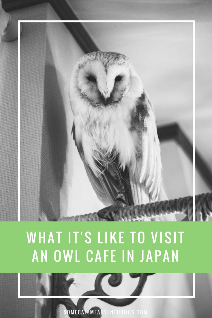 What It's Like to Visit an Owl Cafe in Japan