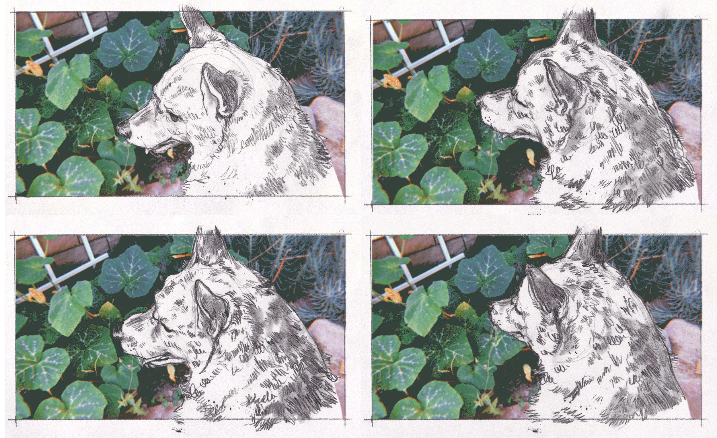 Dog Animation Frames
