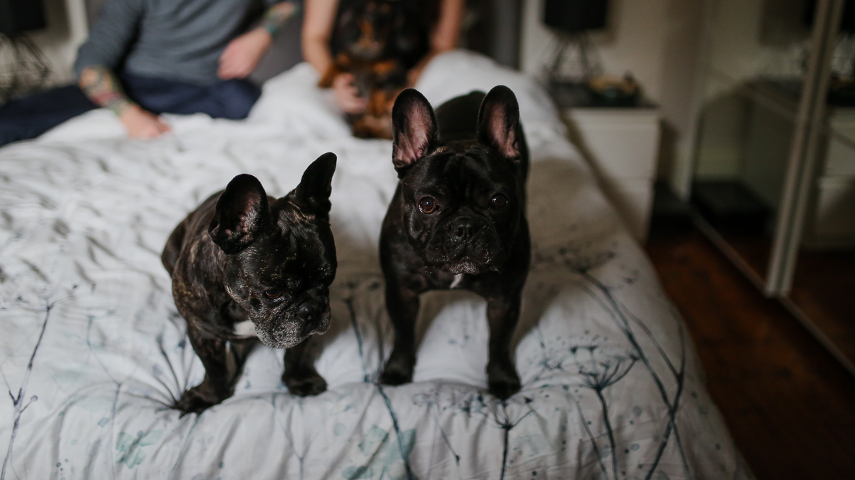Two dogs standing on a bed
